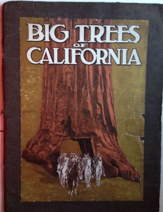Mariposa Grove of Big Trees California. B. M. Leitch.