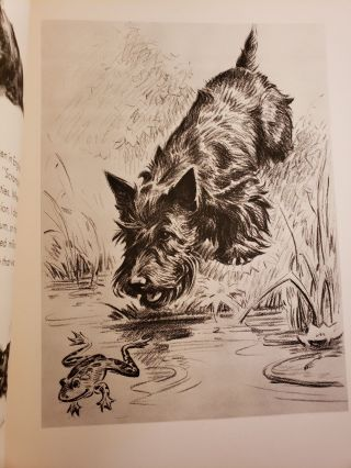 The Morgan Dennis Dog Book (With Some Special Cats)